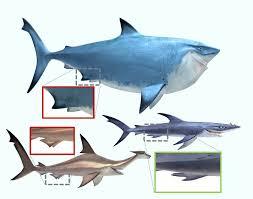 did animators know that two of three u201cfinding nemo u201d sharks