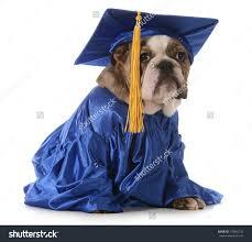 dog graduation cap and gown pet graduation costumes costume model ideas