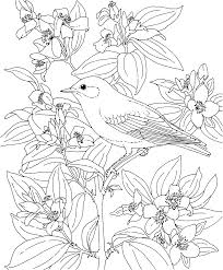 printable coloring page virginia state bird and flower cardinal