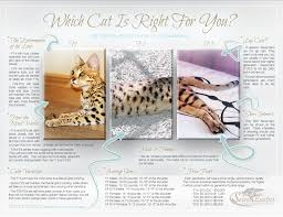 which cat is right for you savannah cat select exotics