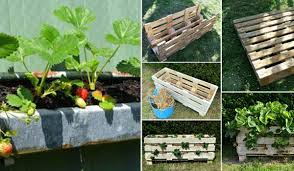 Small Garden Ideas Images Creative Diy Ideas For Growing Strawberries On Small Garden Or