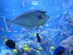 free stock photo of aquarium duisburg fish