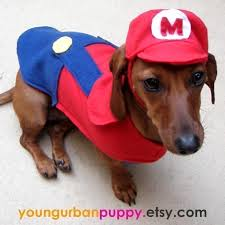 Halloween Costumes Wiener Dogs 35 Clothes Doge Images Animals Dachshunds