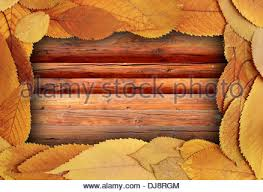 thanksgiving backdrop with cherry leaves on a wooden