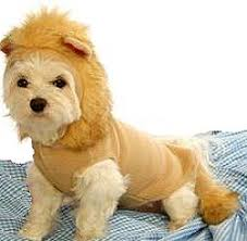 Big Dog Halloween Costume 59 Dog Halloween Costumes Images Dog Halloween