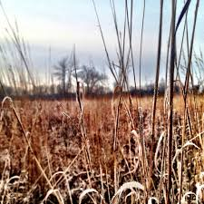 native prairie plants illinois native restoration services