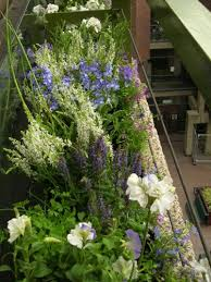 Balcony Planter Box by 22 Best Summer Planter Boxes Images On Pinterest Planter Boxes