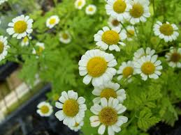 15 low maintenance plants that require little gardening work the