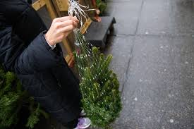 meet your new york christmas tree vendors village voice