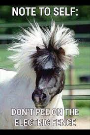 funny bichon frise quotes 123 best funny images on pinterest horses animals and funny horses
