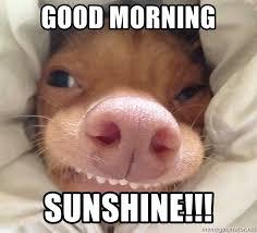 Good Morning Sunshine Meme - good morning sunshine good morning phteve meme generator