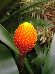 exotic plants and animals tropical and carnivorous plants