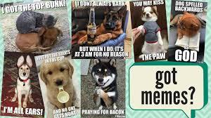 Dog Bacon Meme - positively woof caption this week s meme photo facebook