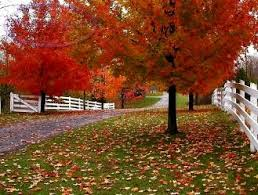 Backyard Trees For Shade - fast growing maple trees maple trees for shade acreage ideas