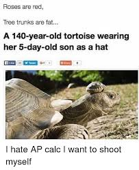 Tree Trunks Meme - roses are red tree trunks are fat a 140 year old tortoise wearing