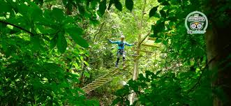 Under Canopy Rainforest by Rainforest Zip Lines Canopy Tours Attractions U0026 Excursions