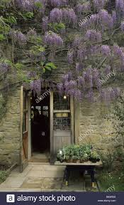 a display of wisteria in full bloom over the shop entrance at