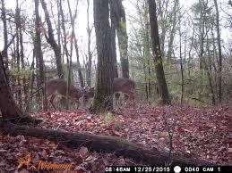 2015 people and places slideshow 8 rifle deer season wnep com