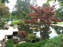 japanese garden pond design stunning cool backyard in japanese