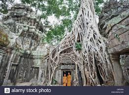 asia cambodia siem reap angkor ta prohm ta prohm temple