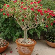 Tropical Potted Plants Outdoor - desert gardening using houseplants outdoors in the southwest
