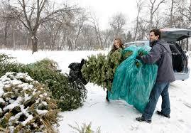 city lists locations to dump christmas trees winnipeg free press