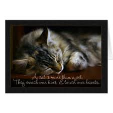 sympathy cards for pets pet sympathy cards invitations greeting photo cards zazzle