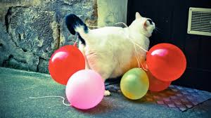 Balloon Memes - funny cats vs balloons epic laughs youtube