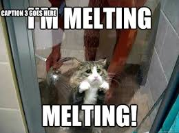 Melting Meme - i m melting melting caption 3 goes here shower kitty quickmeme