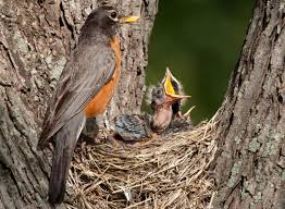 touch baby bird mother abandon