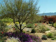 Arizona Landscaping Ideas by Desert Landscaping Tips Cactus U0026 Succulent Garden Pinterest