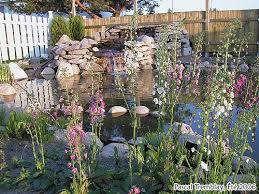 Backyard Pond Building Build Cheap Pond How To Make A Small Pond Water Gardening Projects