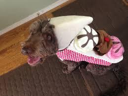 best 25 dog halloween ideas on pinterest dog halloween costumes