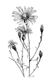 tattoo flower drawings black and white flower tattoo designs collection 86