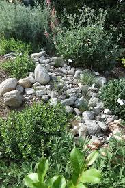 native plants and wildlife gardens garden 4 in valley glen theodore payne native plant garden tour