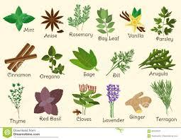 herbes cuisine condiment herbes et épices de cuisine illustration de vecteur