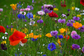 wild flowers in wild meadows ideally the garden should contain a woodland area a wild flower
