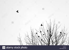 two birds flying from tree stock photos two birds flying from tree