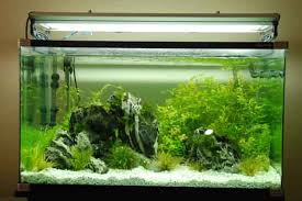 Live Plants In Community Aquariums by A Guide On Planting Your Aquarium