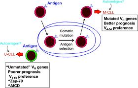 The B Chronic Lymphocytic Leukemia Revelations From The B Cell Receptor