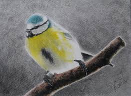 watercolor tutorial chickadee jose corona angry chickadee color pencil drawing paintings for