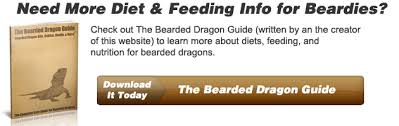 bearded dragon lighting guide bearded dragon nutrition data the bearded dragon