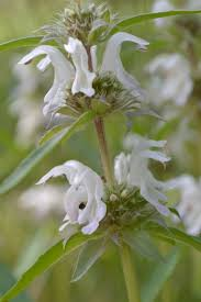 native plants albuquerque instructors albuquerque herbalism