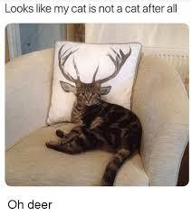 Oh Deer Meme - 25 best memes about oh deer oh deer memes