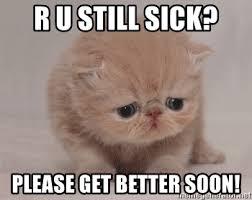 Soon Cat Meme - please get better meme get best of the funny meme