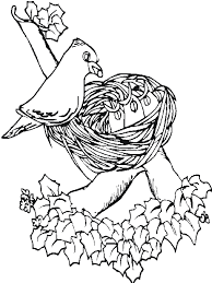 print bird on nest spring animal coloring pages or download bird