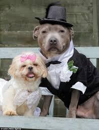 Dog Wedding Dress Till Death Do Us Bark Dog Lover Spends 60 000 Pampering Her