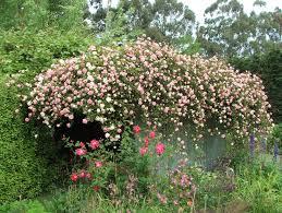 Rose Garden Layout by Garden Border Pictures