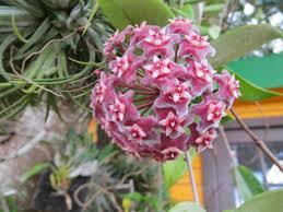 succulents cactus grower isaac farms inc miami florida