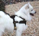 american eskimo dog training purchase now american eskimo dog training supplies